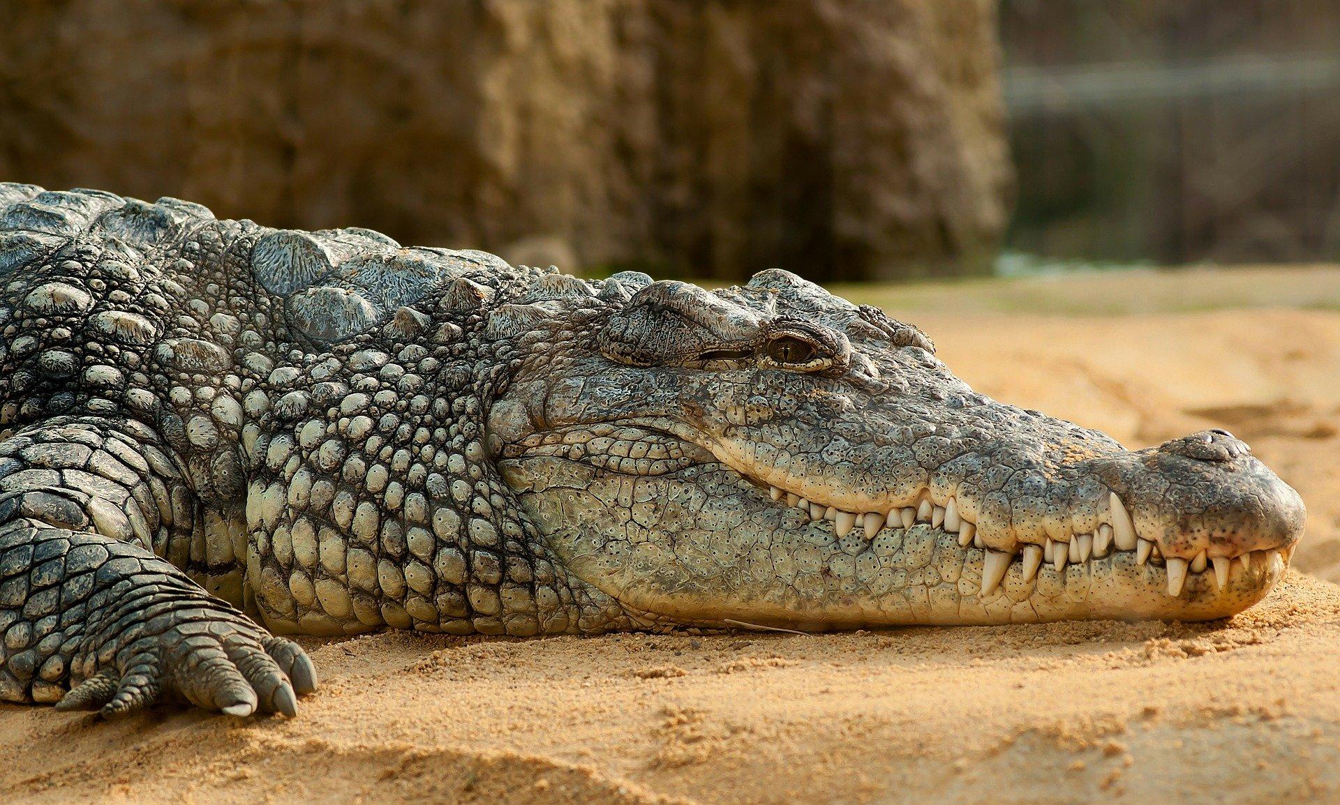 Dubai Aquarium - King Croc
