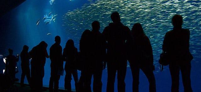 Osaka Aquarium Tickets