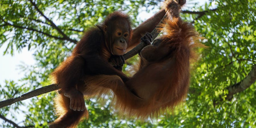 Singapore in May - things to do - Singapore Zoo