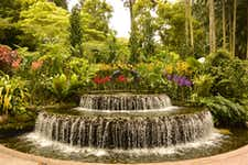 Best Things to do in Singapore - Singapore Botanic Gardens - 3