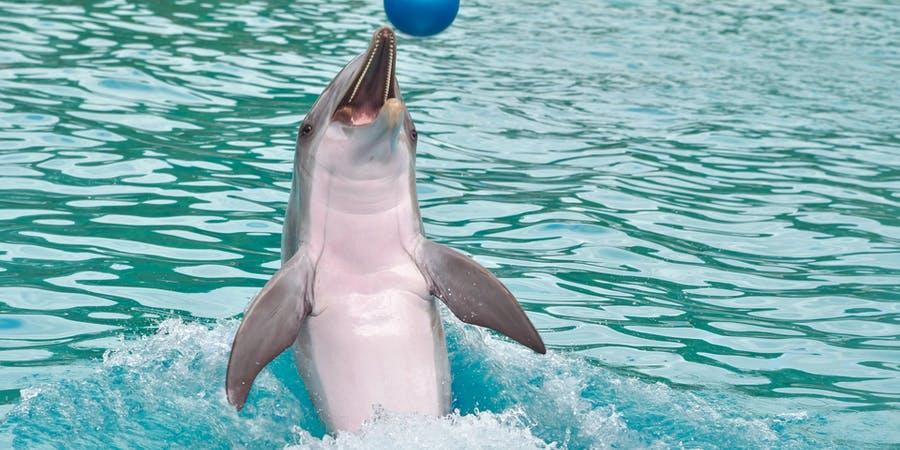 Dubai in march - dubai dolphinarium