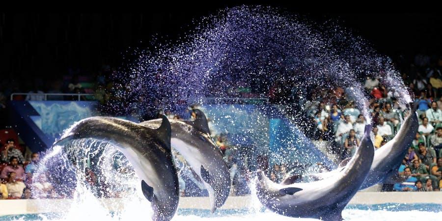 Dubai in february - dubai dolphinarium
