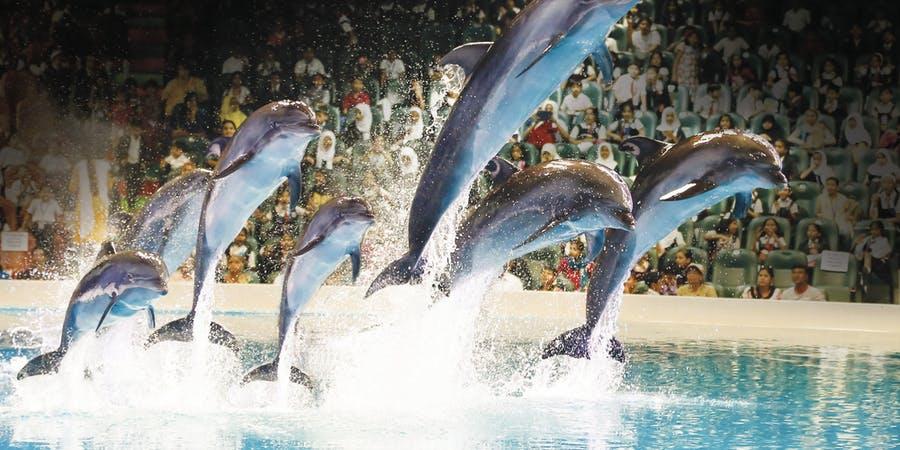 Dubai in may - dubai dolphinarium