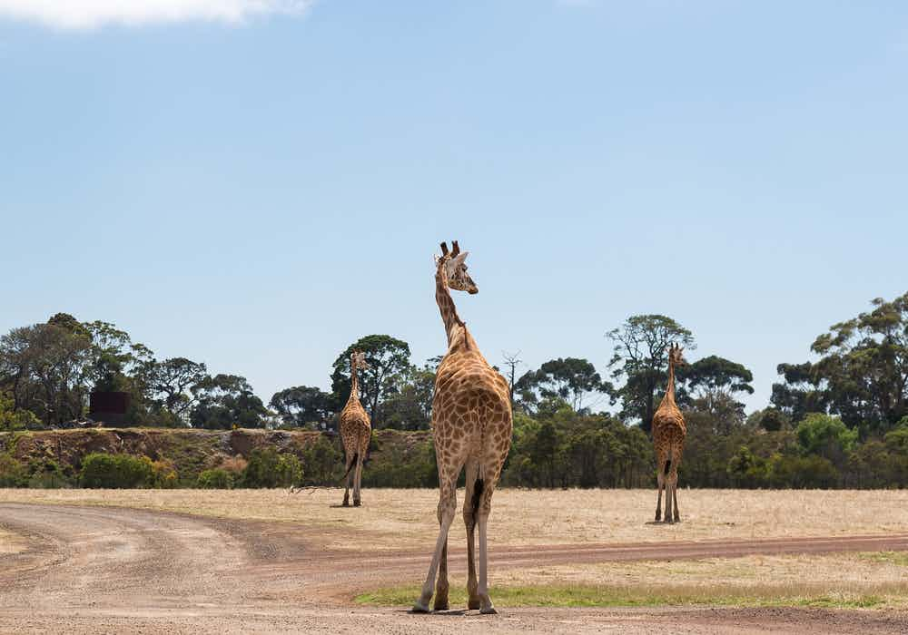 Melbourne Zoo Tickets