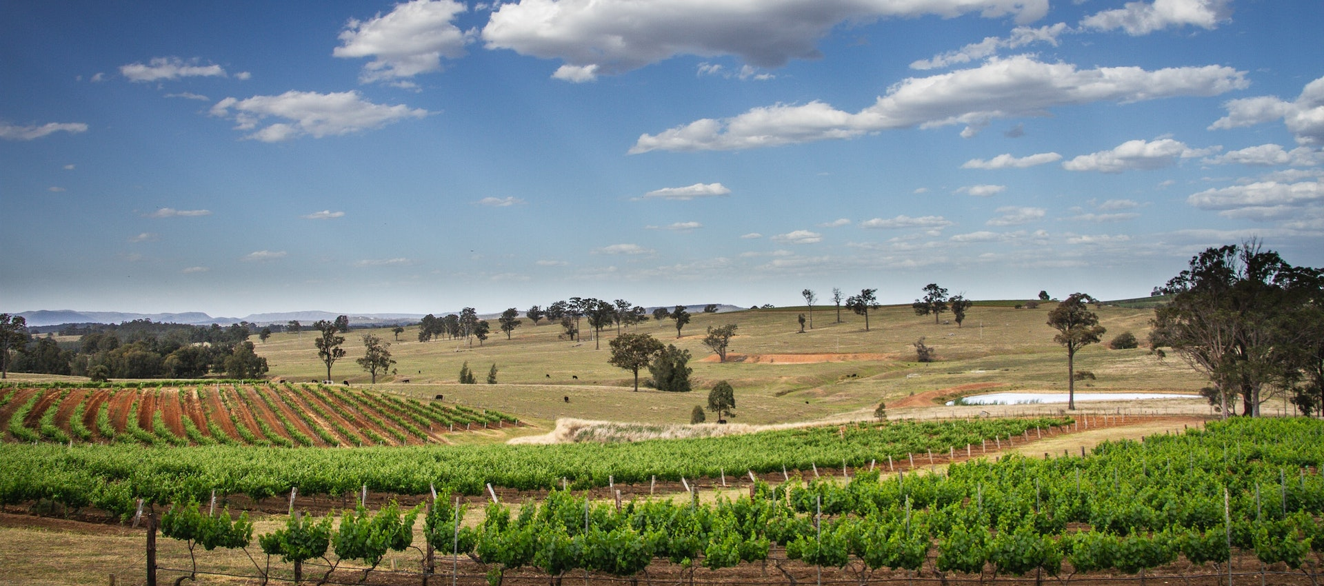Sydney To Hunter Valley tours