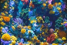 Best Things to do in Sentosa - Sea Aquarium 1