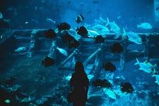 Best Things to do in Sentosa - Sea Aquarium 3