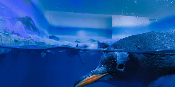 Sea Life Aquarium London tickets