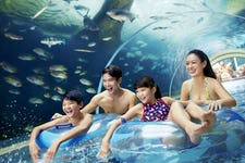 Best Things to do in Sentosa - Adventure cover park 2