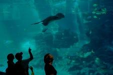 Best Things to do in Sentosa - Sea Aquarium 2