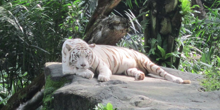 Singapore in October - things to do - Singapore Zoo