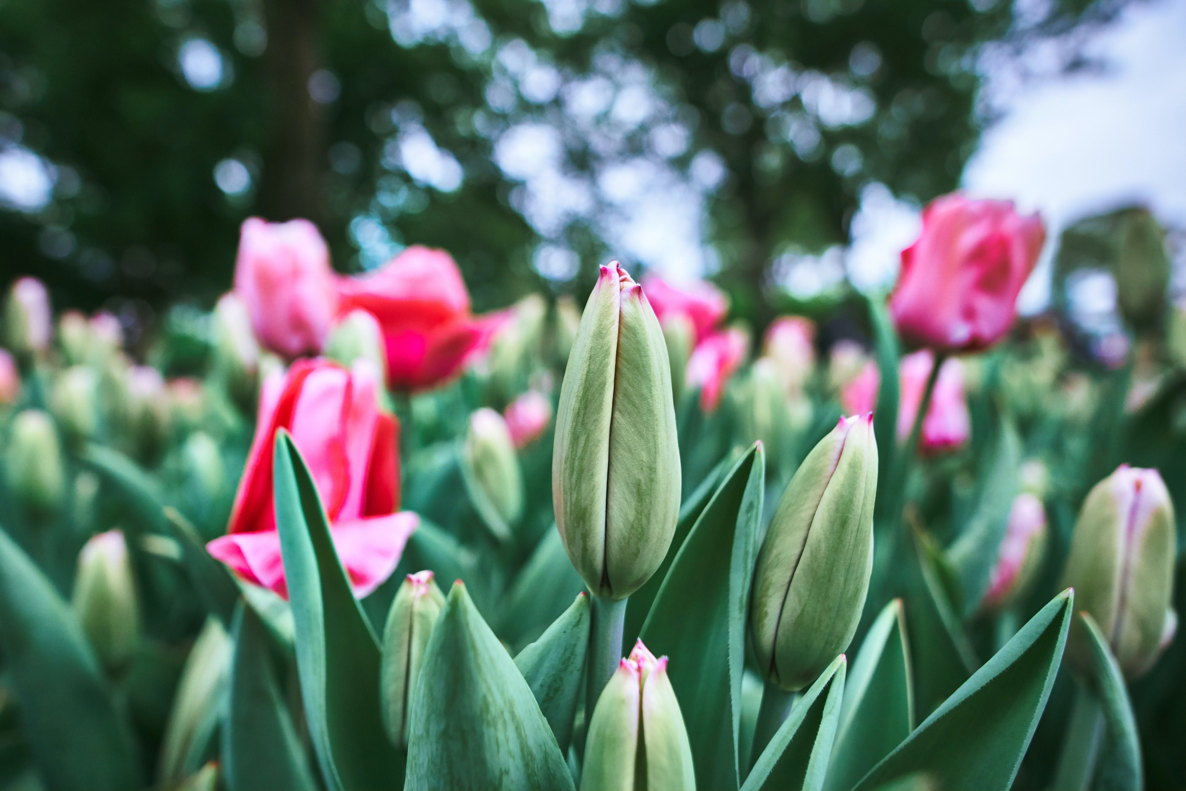 Traveling From Amsterdam To Keukenhof – All You Need To Know